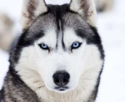 Photo: Pets4Homes.co.uk