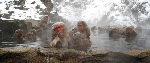 Photo credit: http://www.jrpass.com/blogs/relax-and-unwind-in-an-onsen
